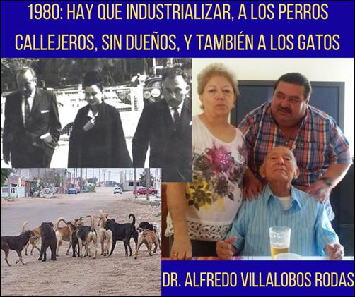 1980: HAY QUE INDUSTRIALIZAR, A LOS PERROS CALLEJEROS, SIN DUEÑOS, Y TAMBIÉN A LOS GATOS